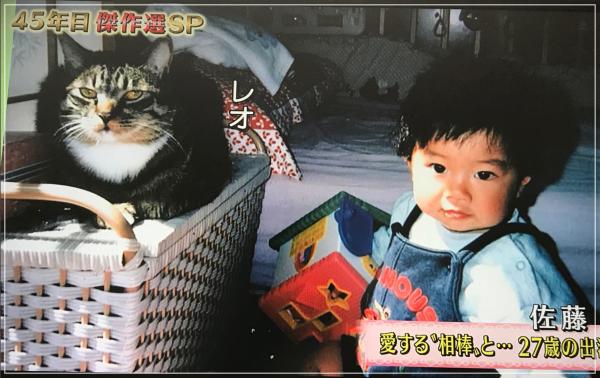 佐藤健と猫