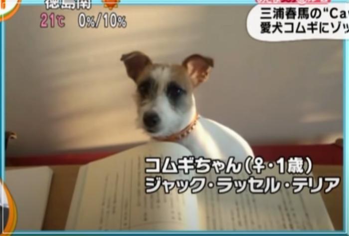 愛犬コムギちゃん